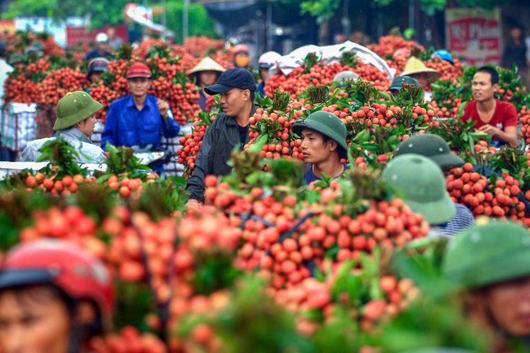 Le plus grand marché de litchi du Vietnam (22/06/20)